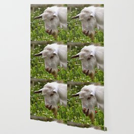Goat A Load To Talk About Wallpaper