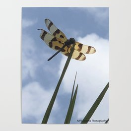 Bruised Dragon Fly Poster