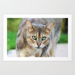 Symba the Abyssinian Cat Art Print