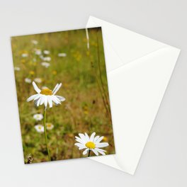 Field daisies Stationery Cards