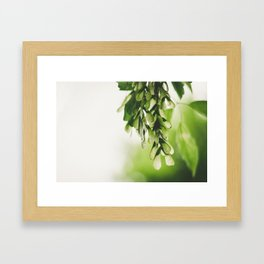 Tilia Framed Art Print