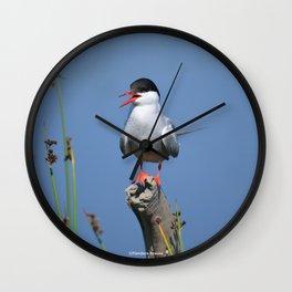 Arctic Tern Wall Clock