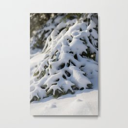 macrophoto of a pinetree covered with snow |Winter artwork | fine art photo print in the netherlands | nature and travel photograpy Metal Print