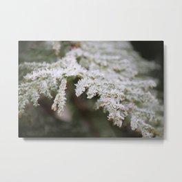 Frozen thuja Metal Print
