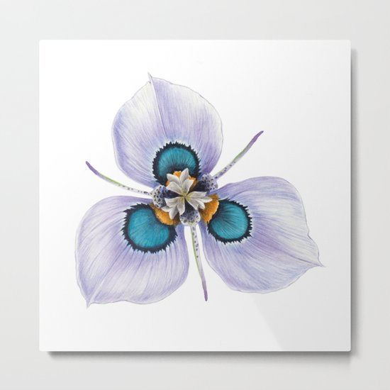 Flower - MORAEA VILLOSA By Magda Opoka Metal Print