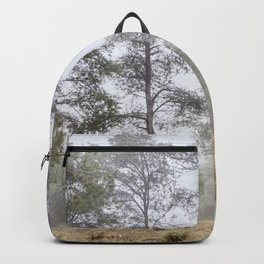 Foggy pine forest. Sierra Nevada Backpack