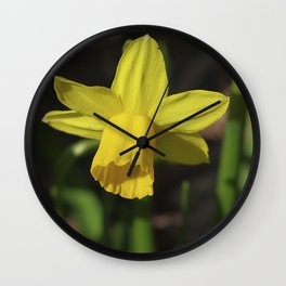 Golden Daffodil Wall Clock