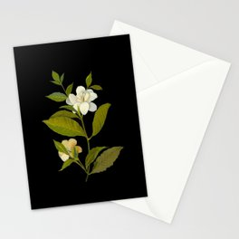 Gardenia Florida Mary Delany Delicate Paper Flower Collage Black Background Floral Botanical Stationery Cards