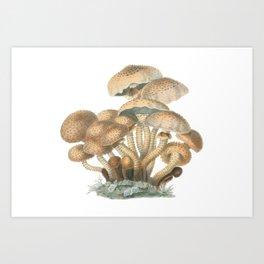 Agaricus Squarrosus Art Print