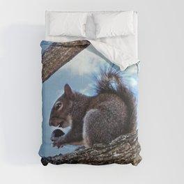Enjoying a Nut Comforters