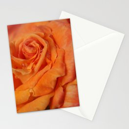 Tangerine Rose Stationery Cards