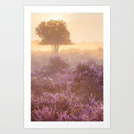 II - Fog over blooming heather near Hilversum, The Netherlands at sunrise Art Print