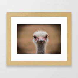 Common Ostrich portrait Framed Art Print