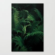 A tale of to ferns Canvas Print