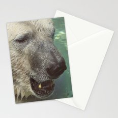 Polar Bear Face Closeup Photography | Wildlife Art Stationery Cards