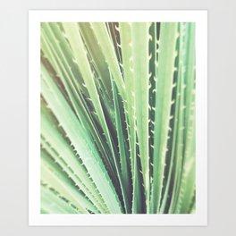 Palm Springs cactus plant California Art Print