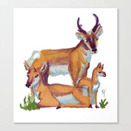 Pronghorn Family Canvas Print