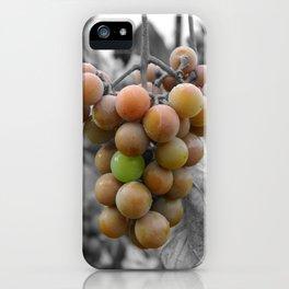 Autumn Harvest iPhone Case