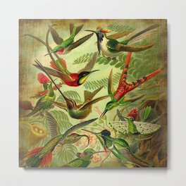 HUMMINGBIRD COLLAGE- Ernst Haeckel Metal Print