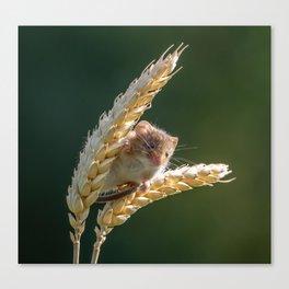 Harvest Time. Canvas Print