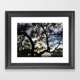 Sunset through the Branches Framed Art Print