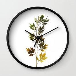 herbarium, natural Wall Clock