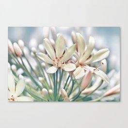 Sumer flower macro 036 Canvas Print