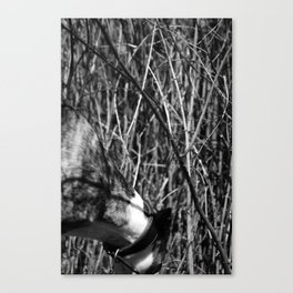 Dog and branches Canvas Print