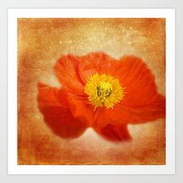 poppy blossom on orange Kunstdrucke