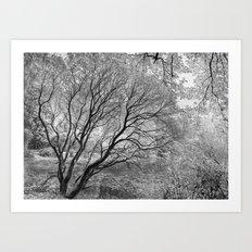 Illusion of Winter Art Print