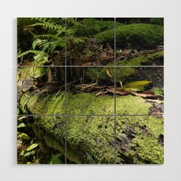 Rainforest Ferns & Moss Wood Wall Art