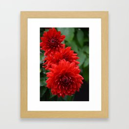 Fresh Rain Drops - Red Dahlia Framed Art Print