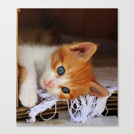 Gorgeous Blue Eyes Canvas Print