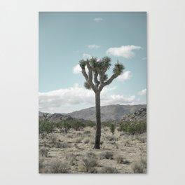 Joshua Tree On A Calm Cool Day Canvas Print