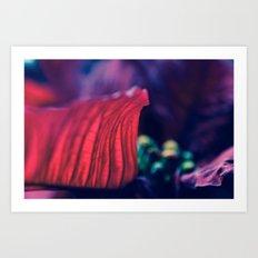 Petal of a Poinsettia Art Print