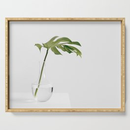 Single Monstera Leaf In Clear Glass Zen Minimalist House Plant Photo Serving Tray