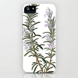 Nature, botanical print, flower poster art of Rosemary iPhone Case