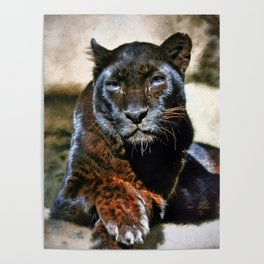 The Black Leopard Poster
