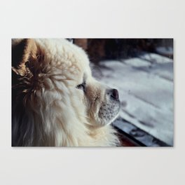 Soft Fur Canvas Print