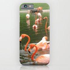 Flamingos Slim Case iPhone 6s