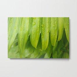 Fresh Tropical Photo Art - Raindrops on Palm Frond Metal Print