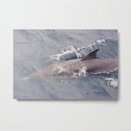 Gray Dolphin Metal Print
