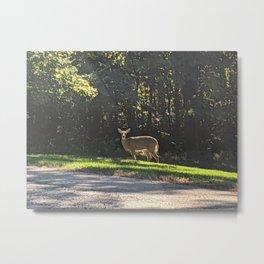Adult Deer Metal Print