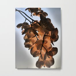 Orchid in rising sun Metal Print