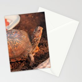 Pampered Turtle Stationery Cards