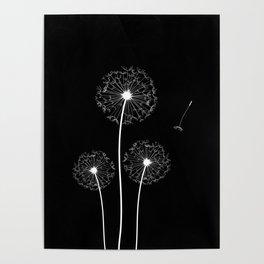 Dandelion Three White on Black Background Poster