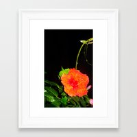 hibiscus Framed Art Prints featuring Hibiscus by Iris V.
