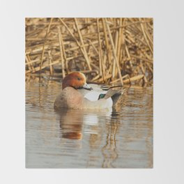 Eurasian Wigeon at the Pond Throw Blanket