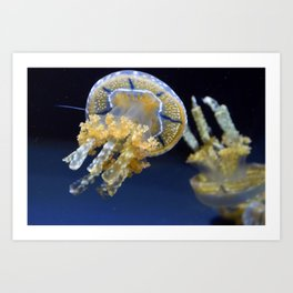 Jelly Fish Print Art Print