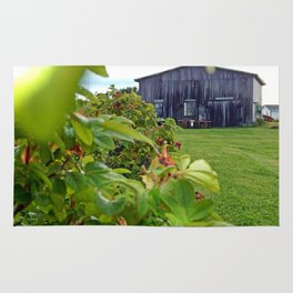 Wild Rose Bush and the Old Barn Rug